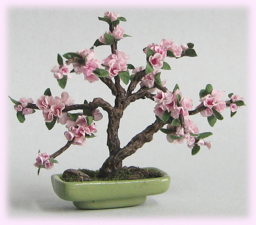 Arta Plantelor BONSAI